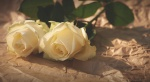 photo-1447713060098-74c4ed0be5e5